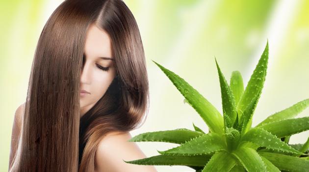 Алоэ для лечения волос